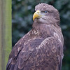 Hawk Conservancy 09-01-13  004