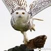 Hawk Conservancy 09-01-13  144