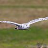 Hawk Conservancy 09-01-13  147