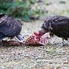 Hawk Conservancy 09-01-13  002
