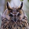 Hawk Conservancy 09-01-13  016