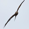 Hawk Conservancy 09-01-13  165