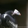 Hawk Conservancy 09-01-13  010