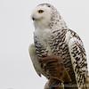 Hawk Conservancy 09-01-13  148