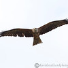 Hawk Conservancy 09-01-13  168