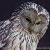 Hawk Conservancy 09-01-13  009