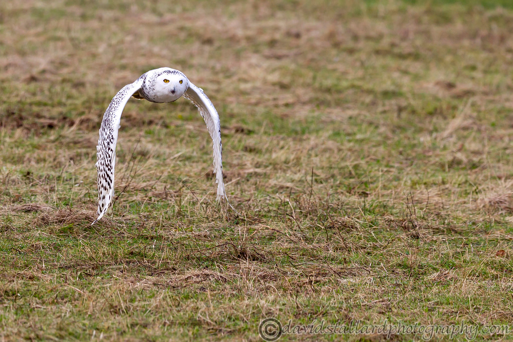 IMAGE: http://www.davidstallardphotography.com/Animals/Zoos/Hawk-Conservancy-09-01-13/i-pV324rF/0/XL/Hawk%20Conservancy%2009-01-13%20%20146-XL.jpg