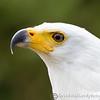 Hawk Conservancy 09-01-13  018
