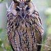 Hawk Conservancy 09-01-13  014