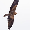 Hawk Conservancy 09-01-13  170