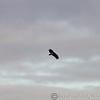 Hawk Conservancy 09-01-13  152