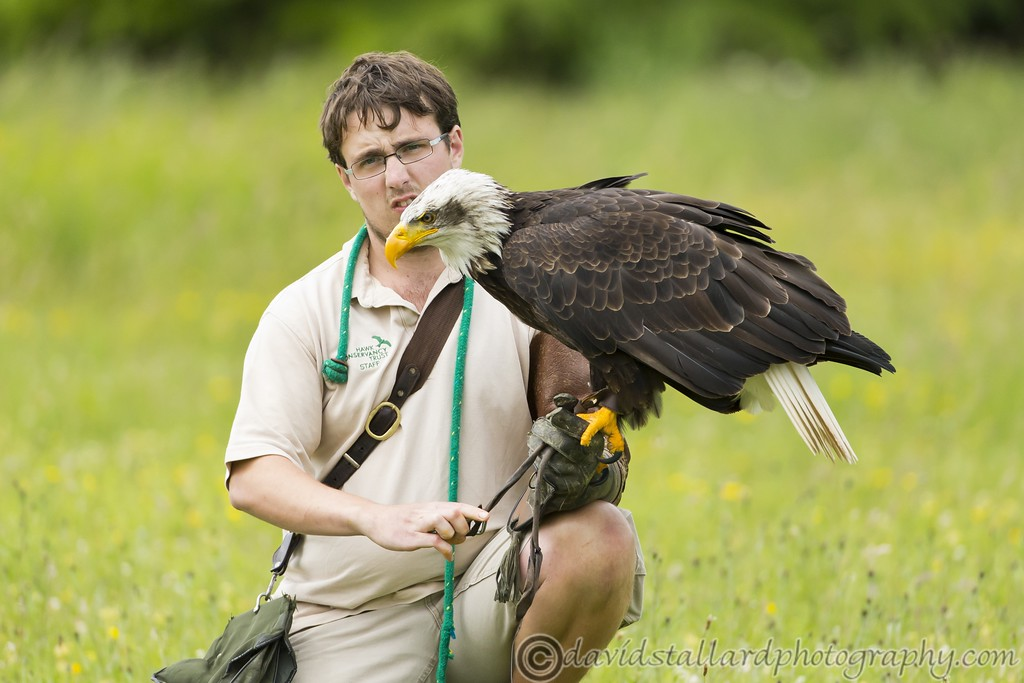 IMAGE: http://www.davidstallardphotography.com/Animals/Zoos/Hawk-Conservancy-20-06-15/i-2gJpjSv/0/XL/Hawk%20Conservancy%2020-06-15%20%200159-XL.jpg