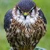 Hawk Conservancy 20-06-15  0012