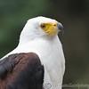 Hawk Conservancy 20-06-15  0002