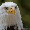 Hawk Conservancy 20-06-15  0007