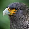 Hawk Conservancy 20-06-15  0009