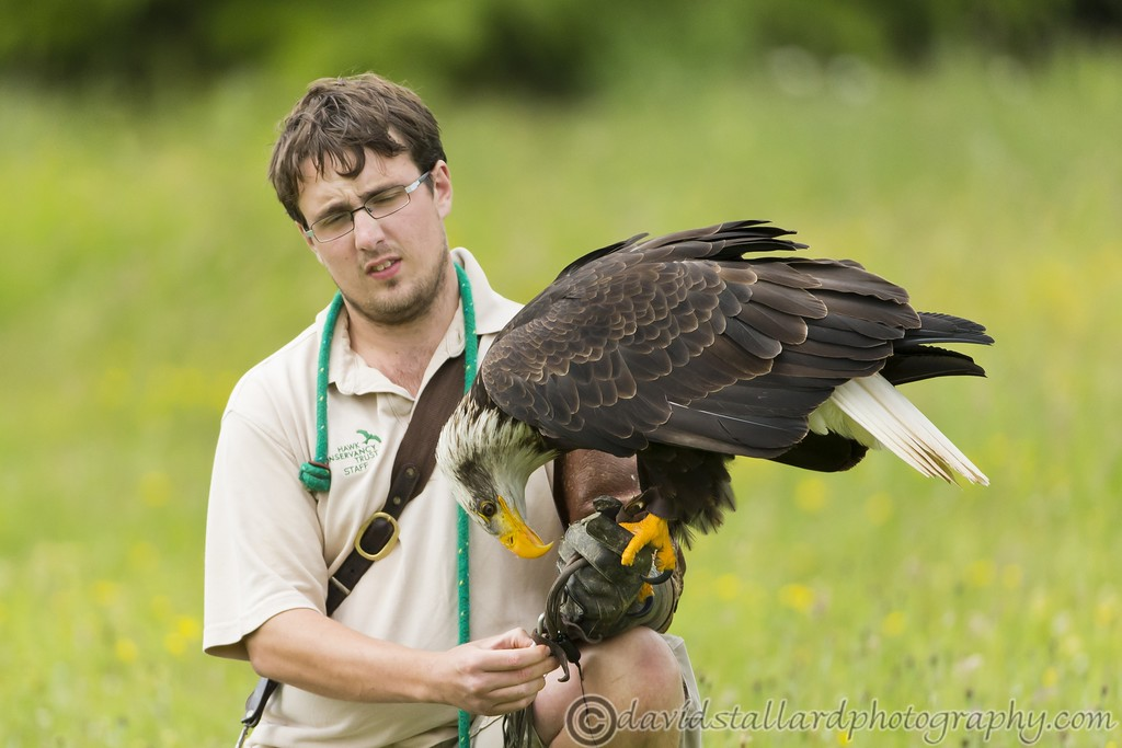 IMAGE: http://www.davidstallardphotography.com/Animals/Zoos/Hawk-Conservancy-20-06-15/i-QRWPZ4x/0/XL/Hawk%20Conservancy%2020-06-15%20%200161-XL.jpg