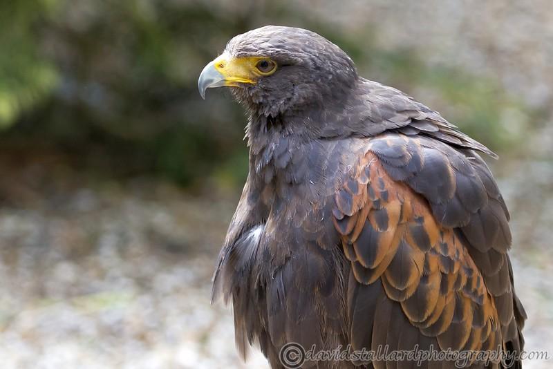 Hawk Conservancy 20-06-15  0001