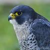 Hawk Conservancy 20-06-15  0010