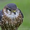 Hawk Conservancy 20-06-15  0014