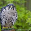 Hawk Conservancy 20-06-15  0015