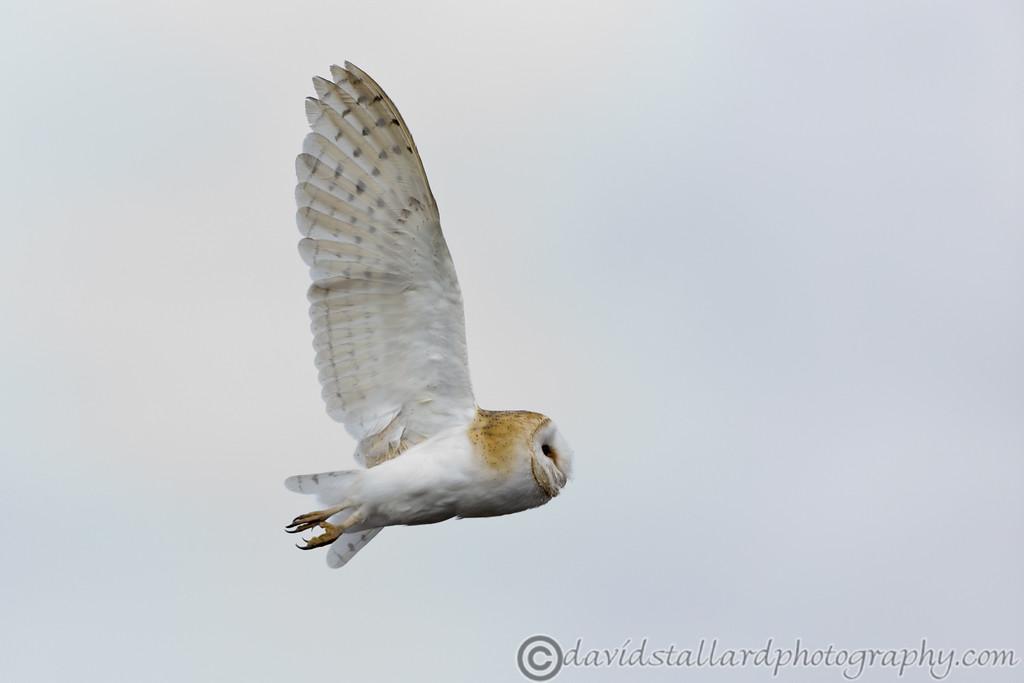 IMAGE: http://www.davidstallardphotography.com/Animals/Zoos/Hawk-Conservancy-20-06-15/i-XfDQdtX/0/XL/Hawk%20Conservancy%2020-06-15%20%200092-XL.jpg