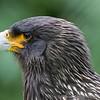 Hawk Conservancy 20-06-15  0008