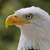 Hawk Conservancy 20-06-15  0006