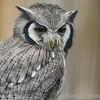 Hawk Conservancy 20-06-15  0020