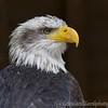 Hawk Conservancy 20-06-15  0005
