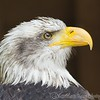 Hawk Conservancy 20-06-15  0004