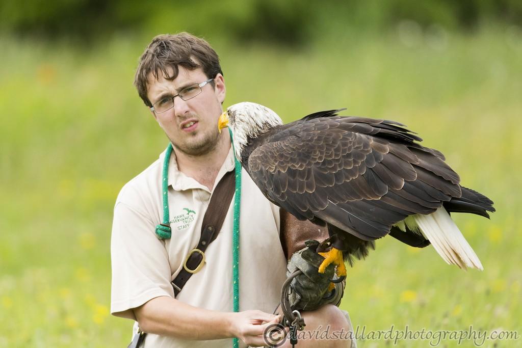 IMAGE: http://www.davidstallardphotography.com/Animals/Zoos/Hawk-Conservancy-20-06-15/i-qnhqm9V/0/XL/Hawk%20Conservancy%2020-06-15%20%200160-XL.jpg