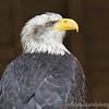 Hawk Conservancy 20-06-15  0003