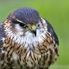 Hawk Conservancy 20-06-15  0013