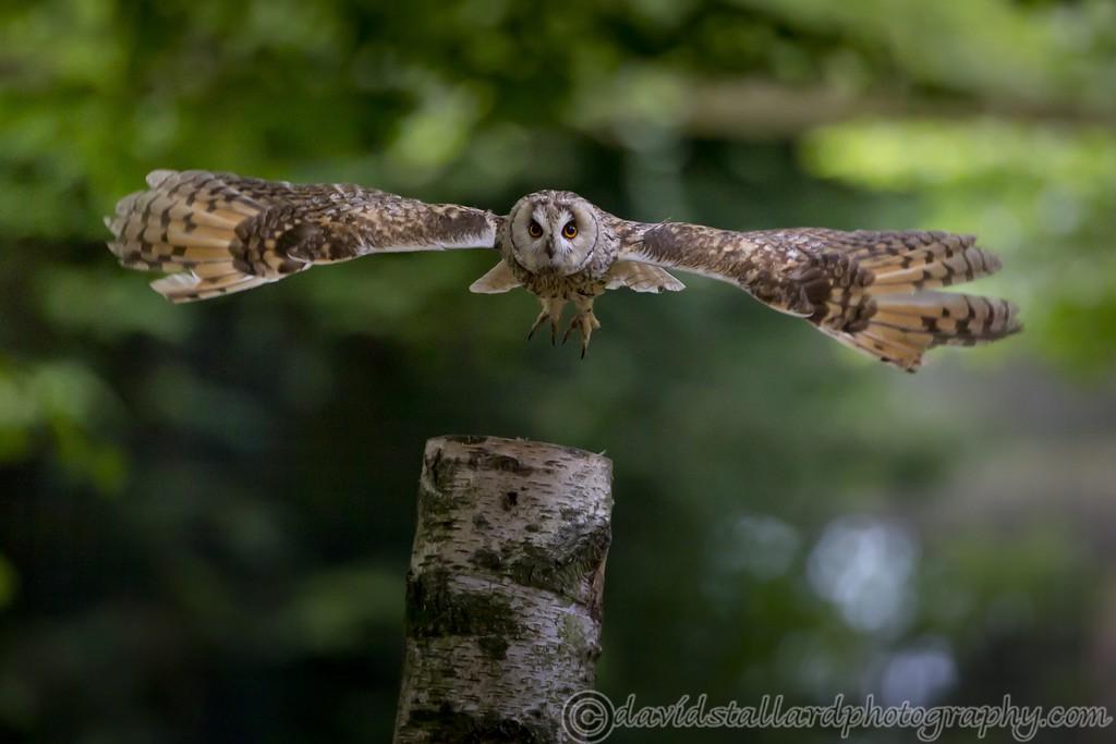 IMAGE: http://www.davidstallardphotography.com/Animals/Zoos/Hawk-Conservancy-20-06-15/i-wMwzff8/0/XL/Hawk%20Conservancy%2020-06-15%20%200197-XL.jpg