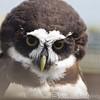 Hawk Conservancy 20-06-15  0019