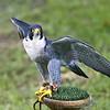 Hawk Conservancy 20-06-15  0018