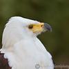 Hawk Conservancy 29-12-14  020