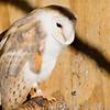 Hawk Conservancy 29-12-14  004
