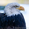 Hawk Conservancy 29-12-14  006