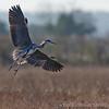 Hawk Conservancy 29-12-14  013