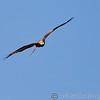 Hawk Conservancy 29-12-14  014