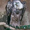 Hawk Conservancy 29-12-14  008