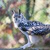 Hawk Conservancy 29-12-14  017