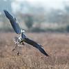 Hawk Conservancy 29-12-14  016