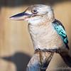 Hawk Conservancy 29-12-14  003