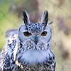 Hawk Conservancy 29-12-14  018