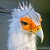 Hawk Conservancy 29-12-14  009