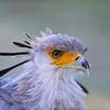 Hawk Conservancy 29-12-14  011