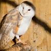 Hawk Conservancy 29-12-14  005